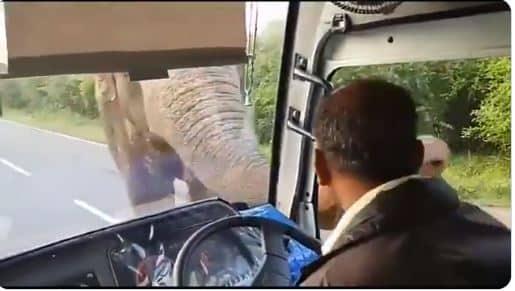 Elephant has been seen Robbing passengers on highway.